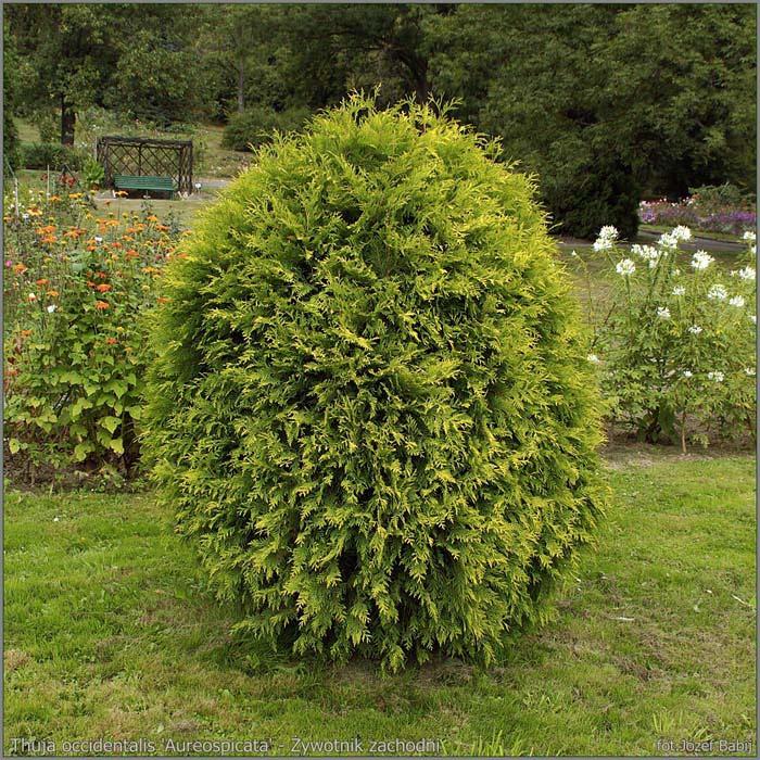 фото дерево крона
